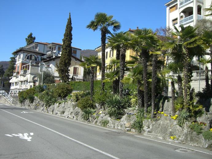 Palmen und Häuser am Ufer des Lago Maggiore