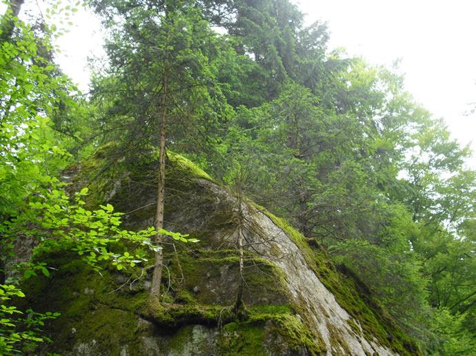 Der Baum wächst im Felsen!