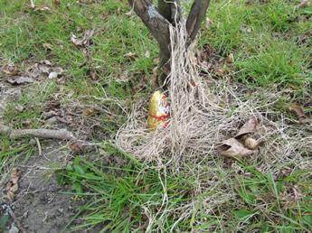 Schkokücken am Baum