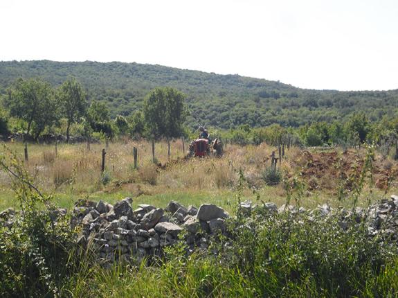 Ein istrischer Bauer bestellt sein Feld